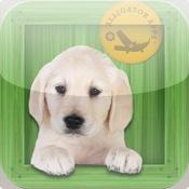 Animal Zoo - Flash Cards & Games