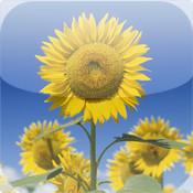 Flower Garden -Photo Library-