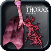 Anatomy Thorax Respiratory