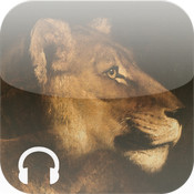 Animal Beauty, The audioguide