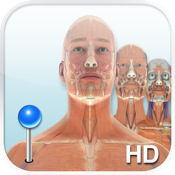 Pocket Body (Musculoskeletal) by Pocket Anatomy