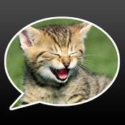 Aww! Messenger