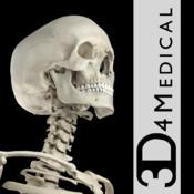 Essential Skeleton