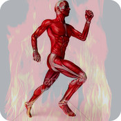 Muscle System Of Human Body For iPhone