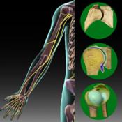 Atlas of Upper and Lower Limb