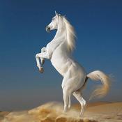 Dream Horses: Huge Art Gallery (3G, Wi-Fi)