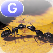 Ants, Ants, and More Ants - LAZ Reader [Level G–first grade] red ants
