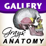 Grays Anatomy - Premium Gallery