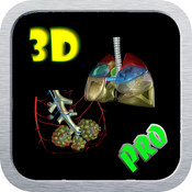 3D Human Lung And Blood Circulation_HD