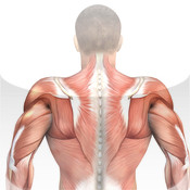 Back & Shoulders: Muscle Building with Craig Ramsay building