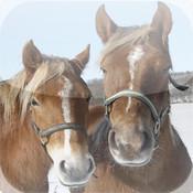 Amazing iSlider Puzzles - Horses Edition