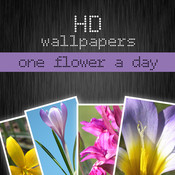 HD flower wallpapers - one flower a day (Retina display) assign icon