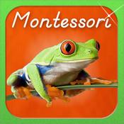 Montessori Approach to Zoology - The Animal Kingdom (Vertebrates) HD