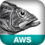 Programming Amazon Web Services web services accelerator