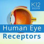 Human Eye Receptors customized goals based