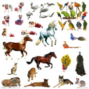 Figure Identify Animals virtual animal
