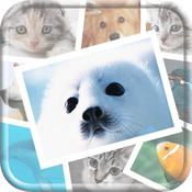 Cute Animal and Pet Photo Collections ctunnel