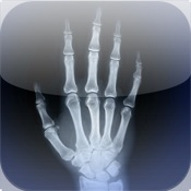 Skeletal Anatomy 3D - Quiz and Reference