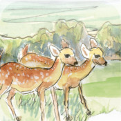 The Tale of the Perfect Whitetails