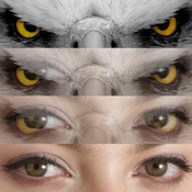 Insta Eye Blender Pro - Create Amazing Eye Blends and Post to Instagram