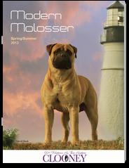 Modern Molosser Magazine