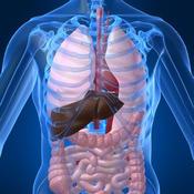 Human Body Atlas - The Handiest Human Anatomy Atlas for Organ Anatomy & Skeleton Anatomy & Muscular Anatomy!