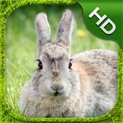 Rabbit Simulator - HD