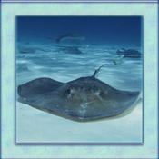 Stingray Simulator 3D