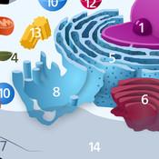 Cell Parts: Cellular Biology Basics