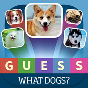 Guess what? Dogs quiz - Popular Dogs in the world