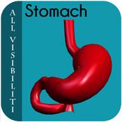 All Visibiliti Stomach