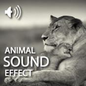 Animals Sound Effect HD sound