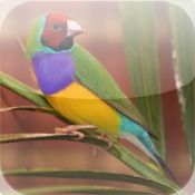 BEAUTIFUL EXOTIC BIRDS – Photographs of Tropical Birds and Other Exotic Birds mad birds pursuit
