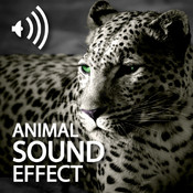 All Animals Sounds Pro