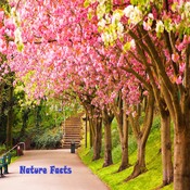 Nature Facts Images & Messages / Latest Facts / General Knowledge Facts