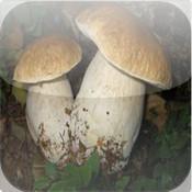 Guida ai Funghi