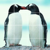 Puzzles+ Penguin Free