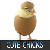 Cute Chick Pictures