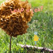 Leap N` Leaf