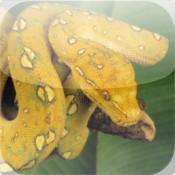 Snakes Wiki