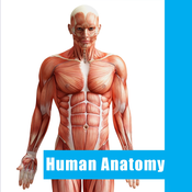 Visual Human Anatomy Alats Pro - Dictionary Anatomical Model of the Human Body