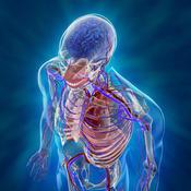 Human Body Facts Pedia bookmark