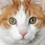 The Tap a Cat App