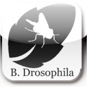B. Drosophila