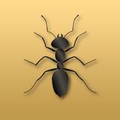 Disturbing Ants red ants