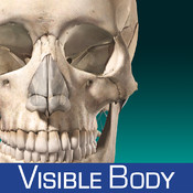 Skeleton Anatomy Atlas: Essential Reference for Students and Healthcare Professionals