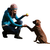 Dog Training Guide - Learn To Train Your Dog ear music training