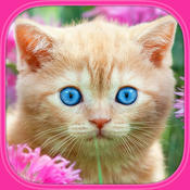 Cats & Kittens Puzzles - Free free kittens in minnesota
