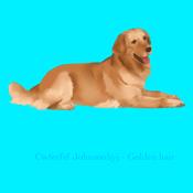 Golden hair Dog
