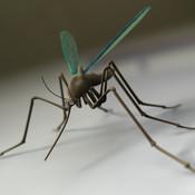 Mosquito Mash